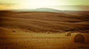 Wheatfields of the Overberg