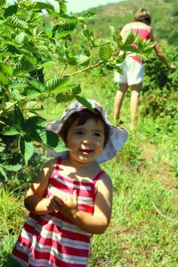 Berry Picking in Summer at Wildebraam Berry Estate in Swellendam, South Africa